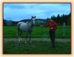 Zobrazit (21 fotek) Koně, kteří u nás byli ve výcviku v roce 2014