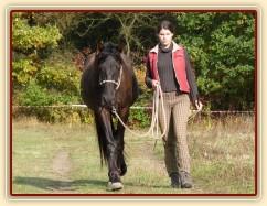 Ducado, dvouletý Andaluský hřebec, na procházce