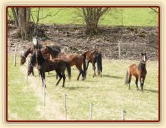 Zobrazit (34 fotek) Stádo hřebců a klisen poprvé na jarních pastvinách