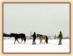 Zobrazit (13 fotek) Lyžování za koňma