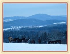 Zobrazit (36 fotek) Fotky z výběhů, dovádění koní, svítání...