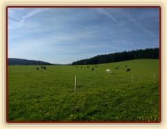 Zobrazit (30 fotek) Vypustili jsme všech 44 koní na pastviny