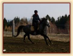 Zobrazit (15 fotek) Obsedání a výcvik problémového koně