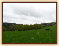 Zobrazit (26 fotek) Všech 38 koní se začalo pást