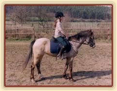 Zobrazit (37 fotek) Welsh pony