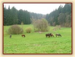 Zobrazit (56 fotek) 2.5.2013 jsme vypustili 32 koní na pastvu...