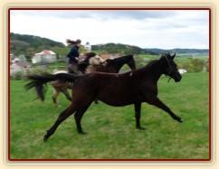 Zobrazit (23 fotek) Co dělali naši koně po celý rok 2009