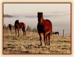 Zobrazit (57 fotek) Koně na pastvinách a v zimním výběhu