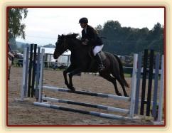 Zobrazit (24 fotek) Koně, kteří u nás byli ve výcviku v roce 2013