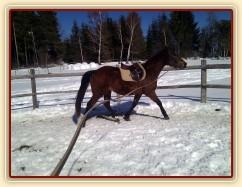 Zobrazit (65 fotek) Jak probíhá obsedání a základní výcvik koní u nás