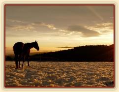 Zobrazit (93 fotek) Koně v zimním výběhu