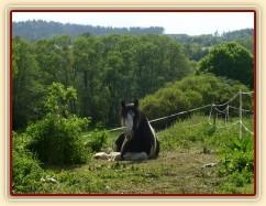 Bas na pastvině - odpočinek