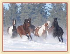 Zobrazit (žádná fotka) Koně, kteří u nás byli nebo jsou ve výcviku