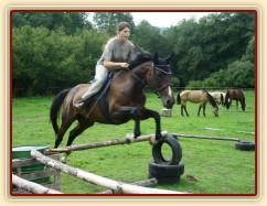 Zobrazit (18 fotek) Czaja na konci výcviku, jízdárna, skoky