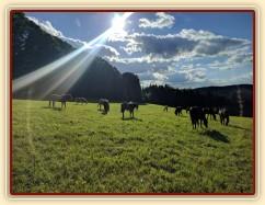 Zobrazit (116 fotek) Hříbata, naše koně a koně ve výcviku u nás