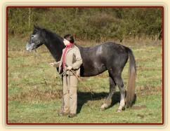 Zobrazit (17 fotek) Koně, kteří jsou u nás ve výcviku plus naši koně