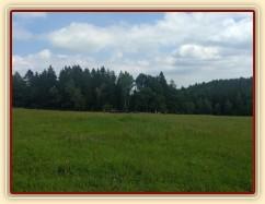 Zobrazit (64 fotek) Stáda klisen a hřebců na pastvinách