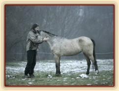 Zobrazit (6 fotek) Podzimní fotky našich koní od Terezy Huclové