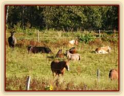 Zobrazit (56 fotek) Podzimní pasení stád klisen a hřebců