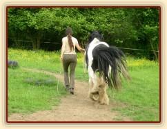 7 her podle Pata Parelli - bez použití lana jde kůň vedle člověka - příprava pro ježdění