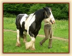 7 her podle Pata Parelli - bez použití lana kůň zatáčí vedle člověka - příprava pro ježdění