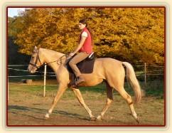Tobiáš, čtyřletý valach koně Kinského, na jízdárně