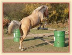 Tobiáš, čtyřletý valach koně Kinského, skákání ve volnosti