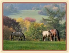 Greisy, Galen a Agáta na podzimní pastvě