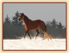 Agáta si užívá běhání na volno ve sněhu, Samantha doprovází