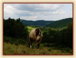 Galen na pastvě (jestlipak se ti koně někdy kochají tím výhledem do kraje...:-)