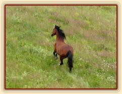 Agáta si užívá vysoké trávy při vypuštění na novou pastvinu