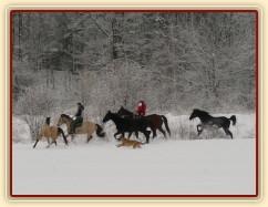 Všichni naši koně pohromadě na vyjížďce, zima 2009