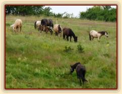 Stádo na nových pastvinách