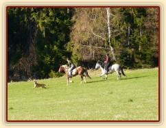 Naše pastviny v Čeleticích, Vikina a Divík testují povrch:-)