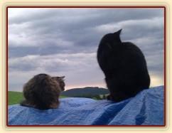 Naše kočky koukají do krajiny:-)