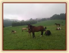 Stádo na pastvině, mají zrovna siestu po dešti