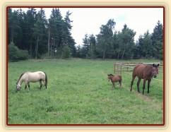 Největší s nejmenším - Chuezca a měsíc starý pony hřebeček Gimli