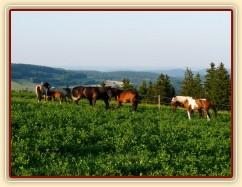 Stádo na pastvině s výhledem do dáli