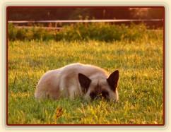 Samantha odpočívá ve večerním slunci