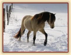 Zimní pastvina