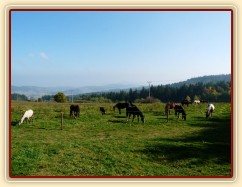 Ze zimního výběhu mají koně pěkný výhled do krajiny:-)