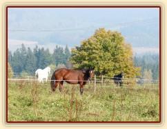 Koně ve vysoké trávě, říjen 2010