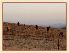 Konec října, východ slunce, ojíněná tráva v zimním výběhu
