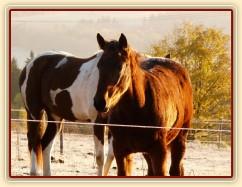 Odpočívající koně, brzké ráno na konci října