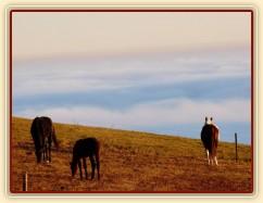 Ranní slunce, koně v zimním výběhu a jejich výhled do krajiny v mlze