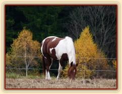 Koně v zimním výběhu, začátek listopadu