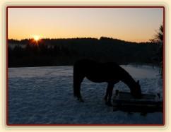 Pití vody při východu slunce