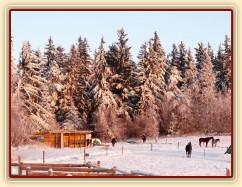Koně odpočívají  u přístřešku