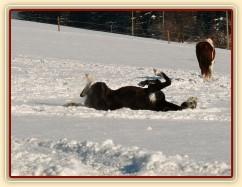 Válení ve sněhu je nejlepší