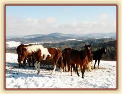 Koně u sena a jejich výhled do krajiny:-)